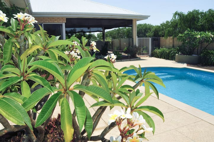 Frangipani trees located around the pool