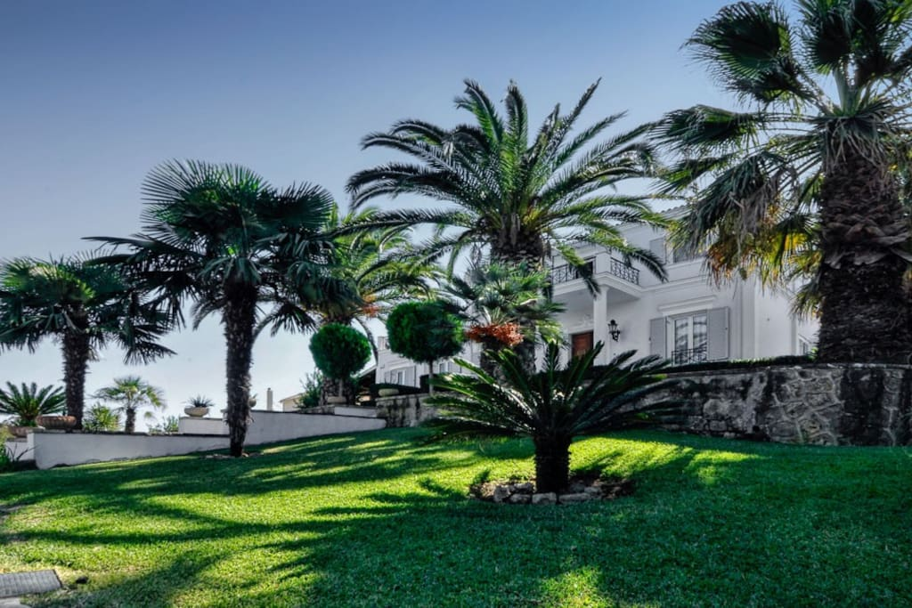 Palm trees in the garden.
