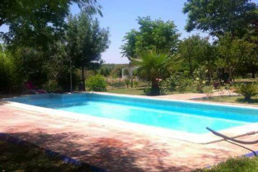 La piscina y amplia zona ajardinada