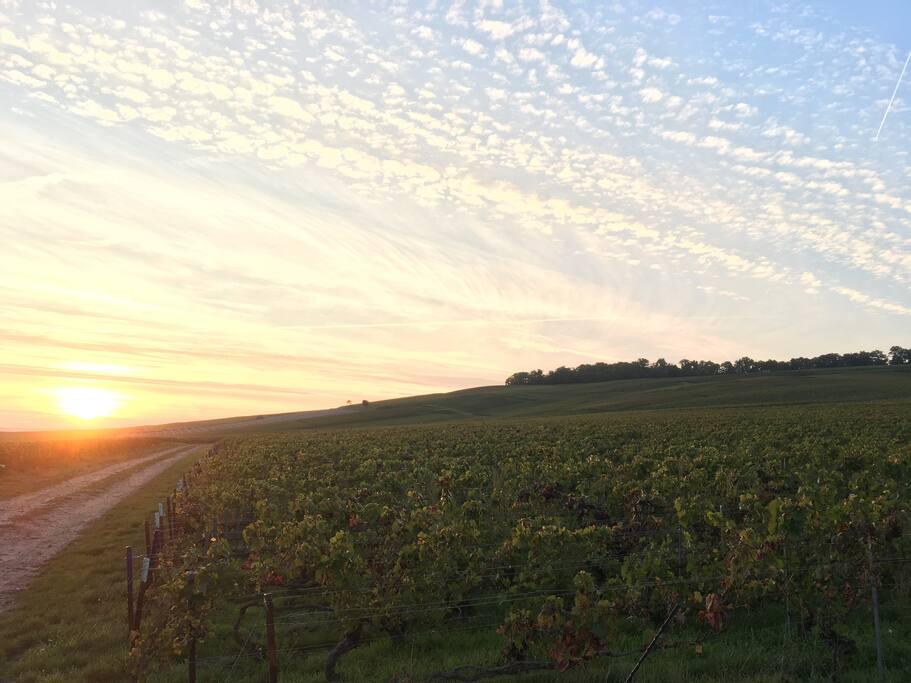 """Vignoble d'Ambonnay, l'un des 17 villages de France classé 100% Grand Cru -  Ambonnay's vineyard, one of the 17 french classified village as 100% """"Grand Cru"""""""