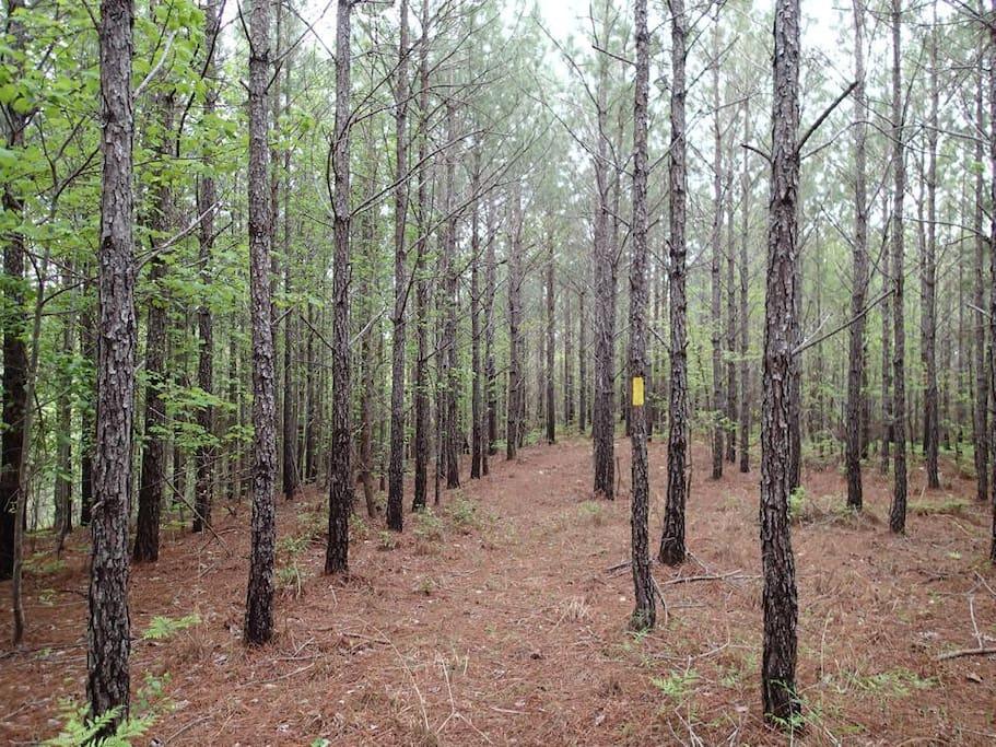 Coosa Trail