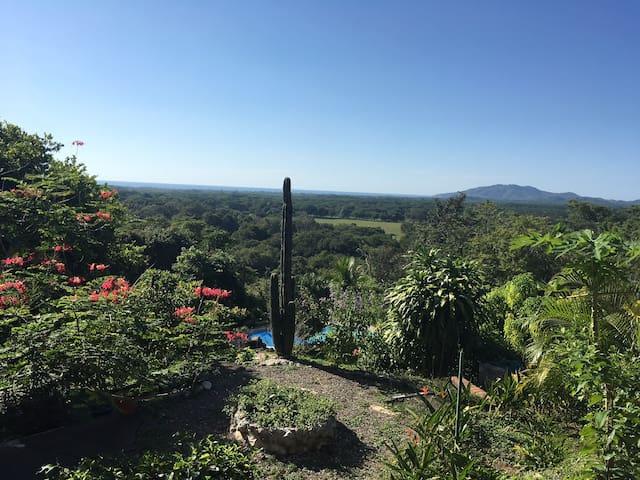 Ocean view room in tropical paradise! - F1