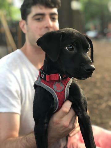 Dog Friendly Sunlit Location w/ Backyard