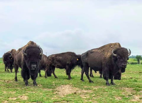 BISON farm retreat minutes from the city