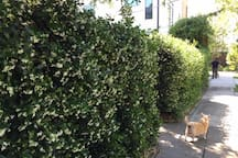 Front of the house with jasmine in bloom