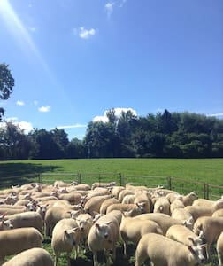 Camping on glorious Herefordshire Farm, Ledbury P3 - Herefordshire - Tenda