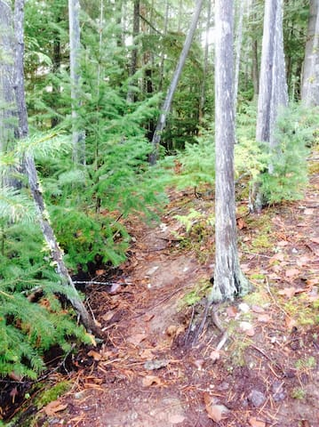 Trail through the forest that leads to creek. Perfect for taking Fido off leash!