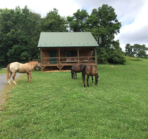 One Appaloosa, two quarter horses enjoying the grass.