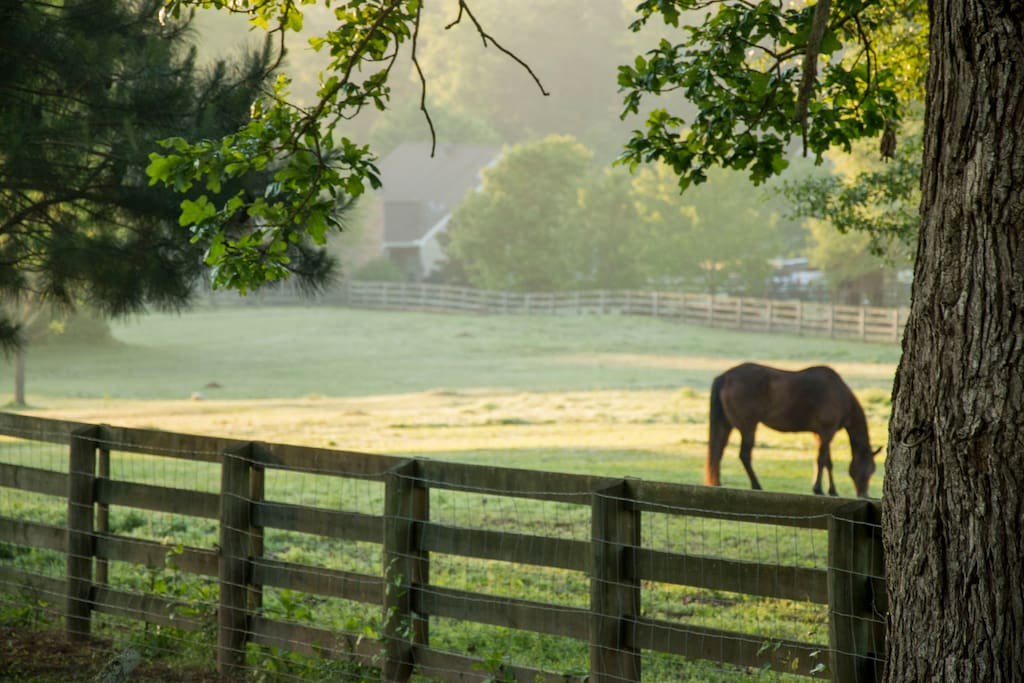Enjoy watching the horses graze in the pasture