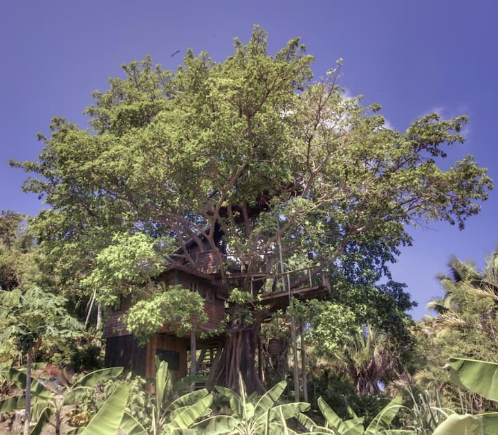 Utila Treehouse, Romantic and Lush!