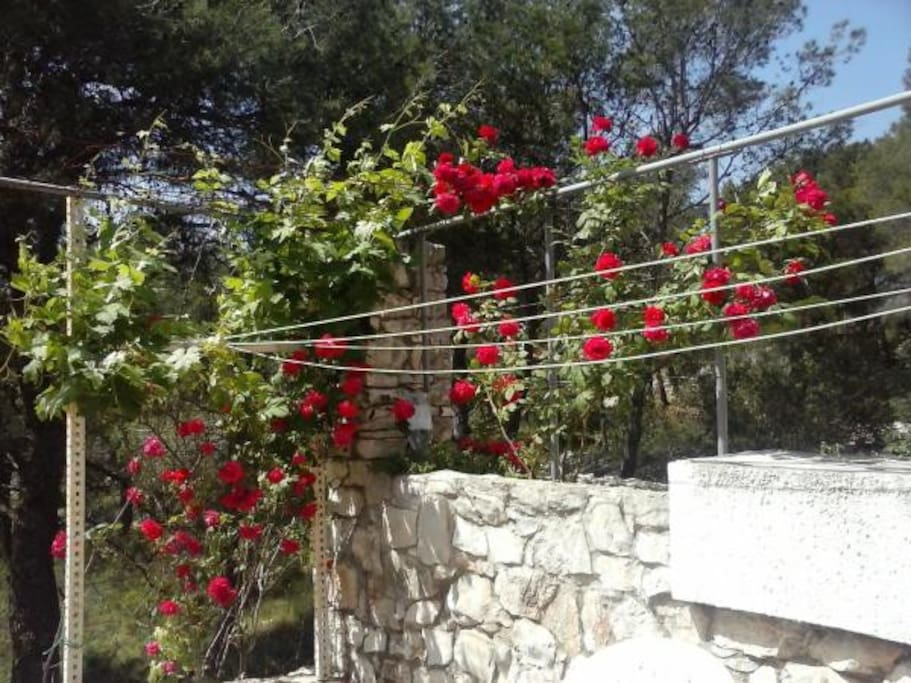 roses on balconi