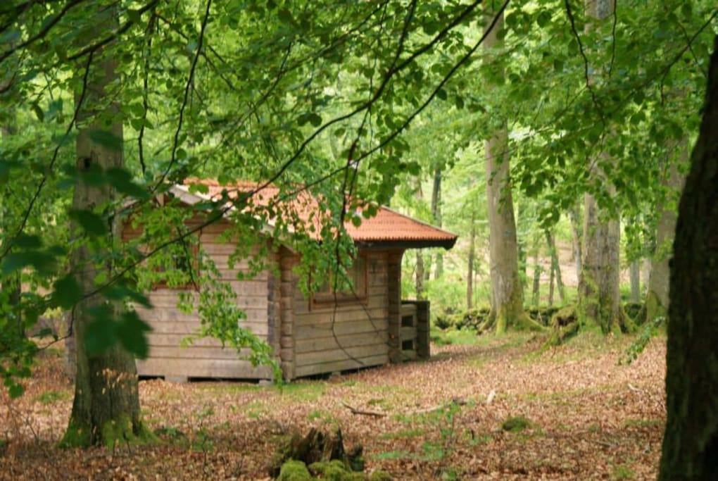 The cabin is in the middle of the forest,  no neighbours.