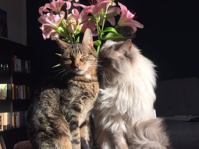 3-Zimmer Altbauwohnung - nur für Katzenliebhaber