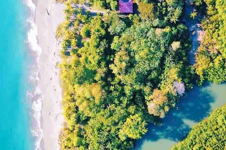 Jungle and beach