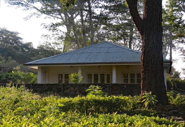 The Cottage, Koslanda