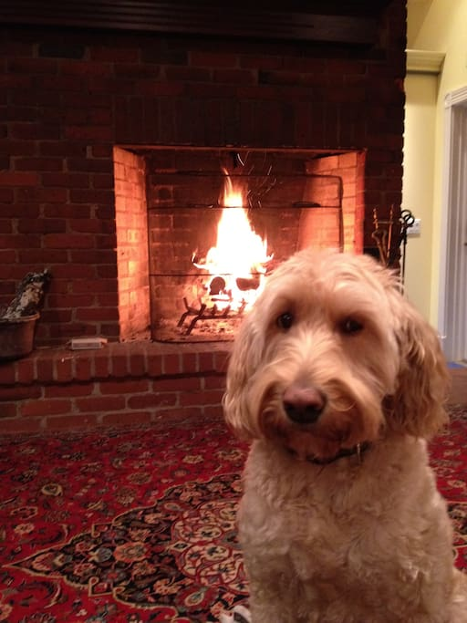 Maggie by the fire