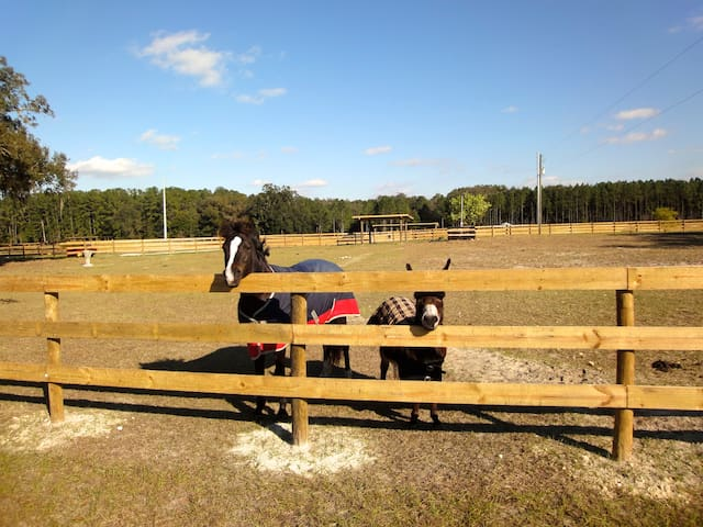 Horse Farm #1 HITS, Devils Den, Blue Grotto, Ocala - Williston - Hus