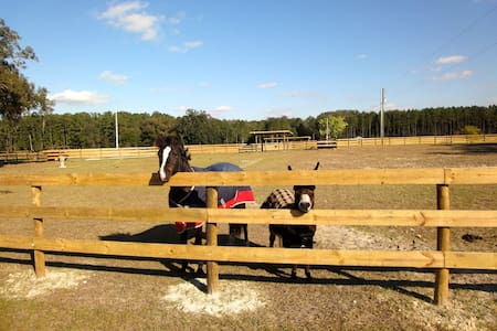 Horse Farm #1 HITS, Devils Den, Blue Grotto, Ocala - Williston