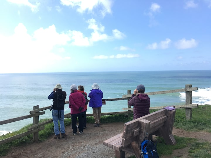 Watching for whales