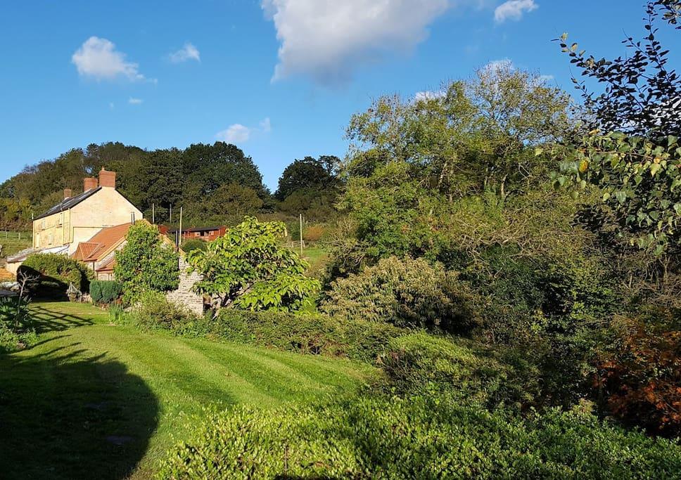 ----more garden...
