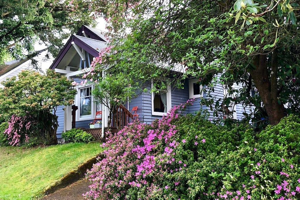 House through the Spring Blossoms.