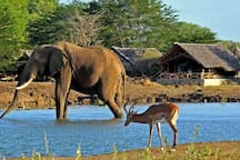If you are here long enough we have a great Safari Camp only a few hours drive away.