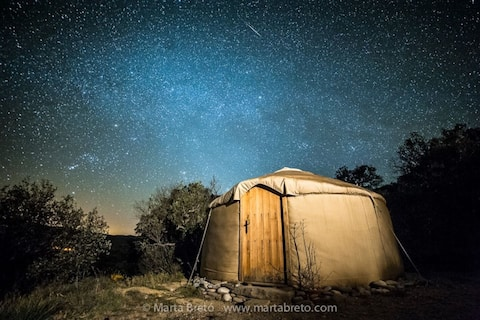 Small yurt among trees