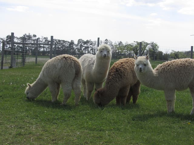 Alpaca Farm Retreat - Stoney Creek - In-law