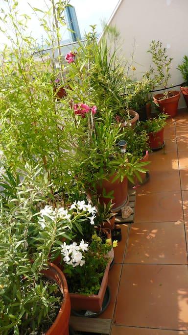 Une grande terrasse de 26 m2 au dernier étage avec plantes et fleurs et arrosage automatique. Idéal pour sieste et bronzage