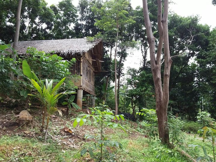 Bamboo House for Backpacker