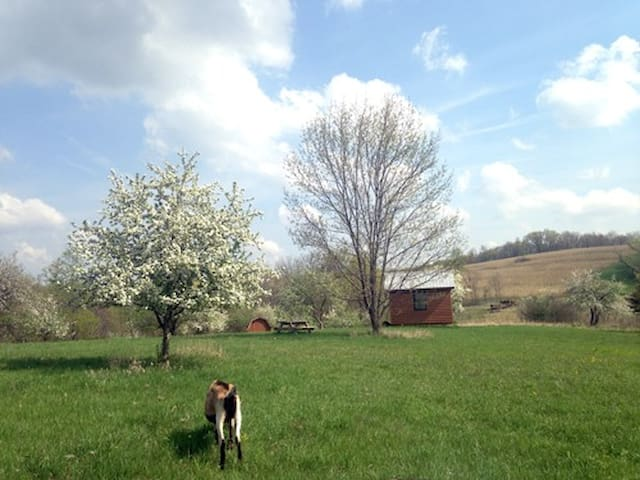 Wild Apple Orchard Hike In Cabin - Soldiers Grove