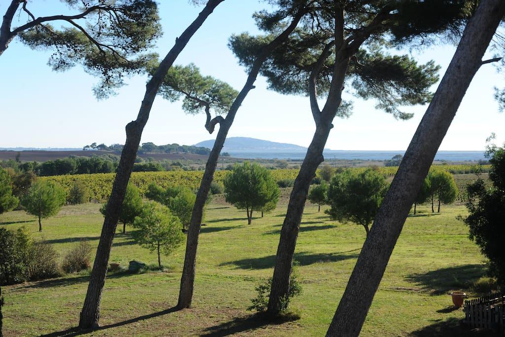 Le parc avec vue sur le Mont Saint Clair à Sète et l'Etang de Thau.