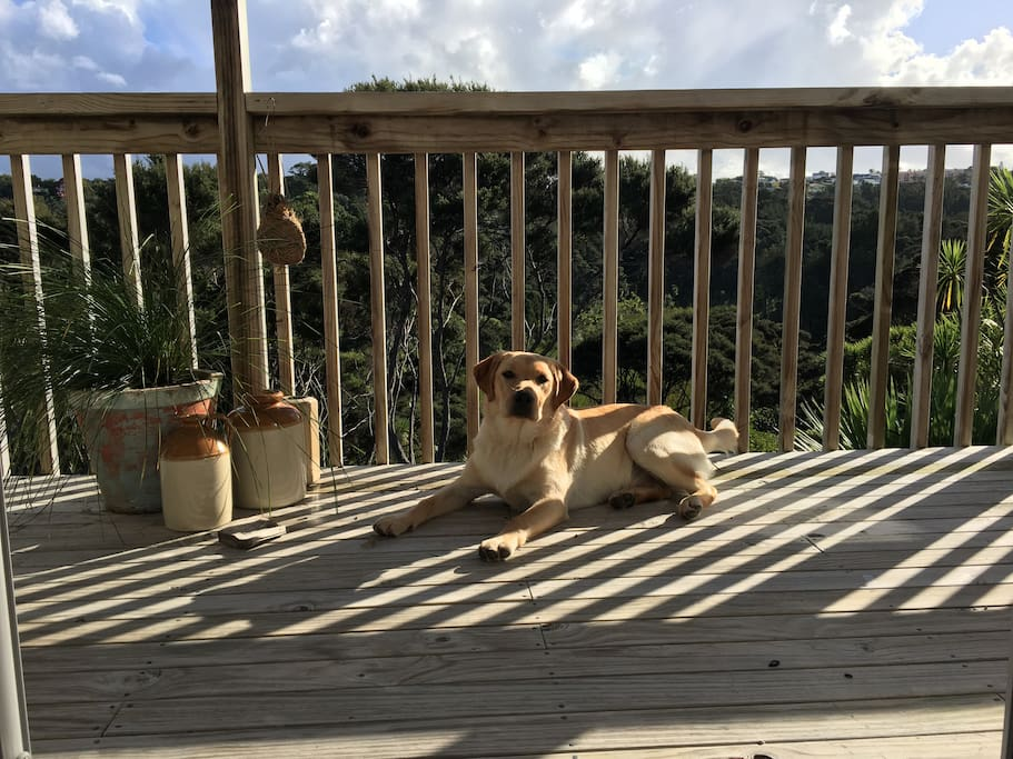 View from bedroom balcony and 6 month old puppy, Rocko
