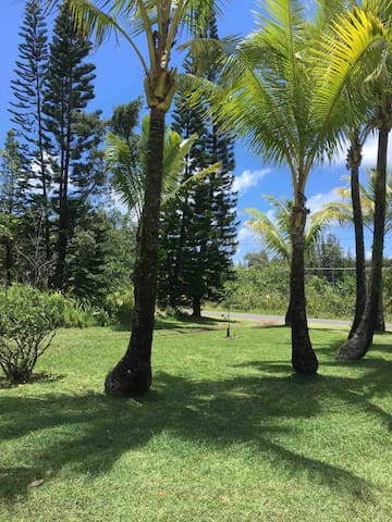 You are greeted by palm trees on this one acre property in rural Hawai'i