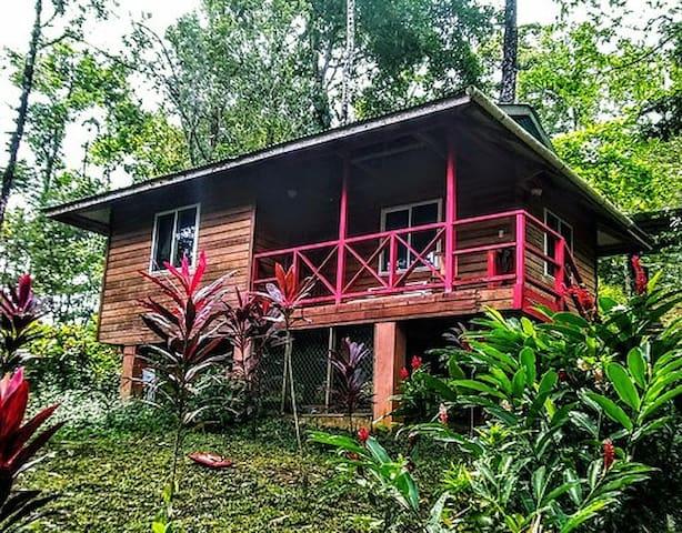 Jungle house Red Hill Villa Bocas, Isla Solarte