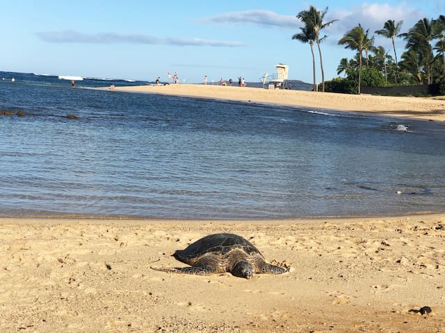 Say HI to the sea turtles and monk seals at Poipu beach after your morning stroll.