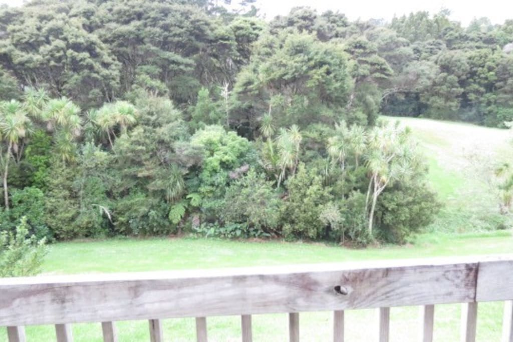 This is the view from my verandah. It is a lovely protected park and bush. People go walking, play golf, walk their dogs and some people have picnics here.