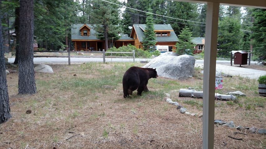 Maybe lucky enough to see a bear walking by!