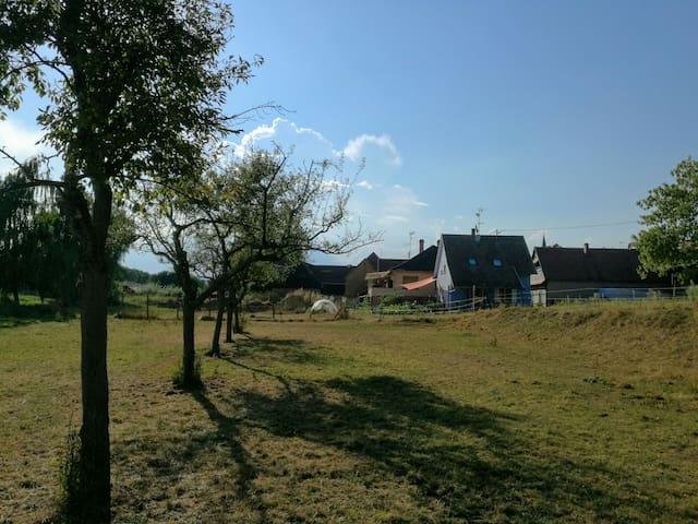 La petite maison devant la prairie - Griesheim-prés-Molsheim - House