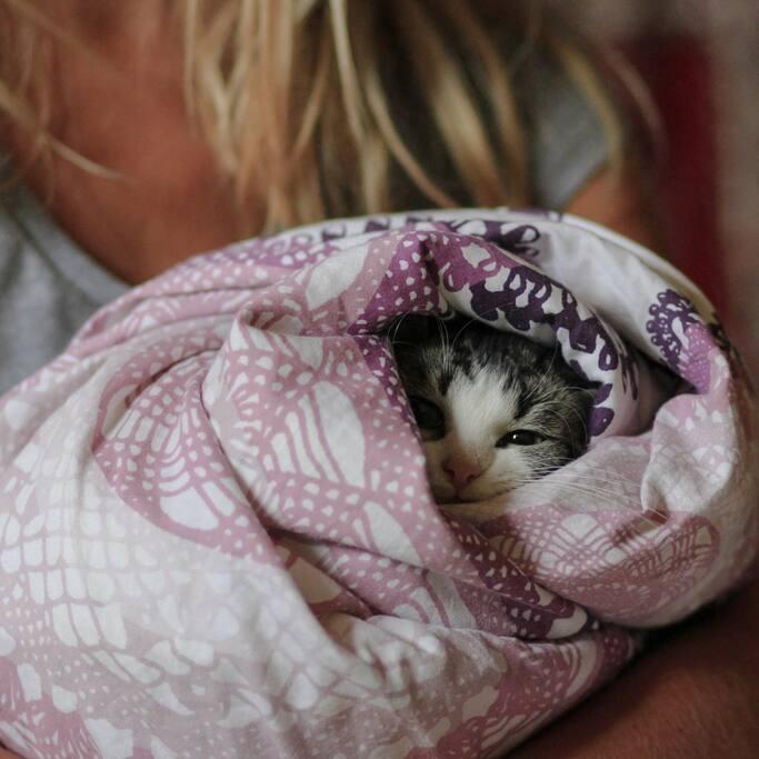 Our cutie cat *_*