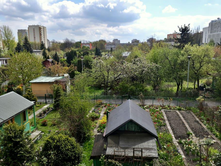 balcony garden view ♡