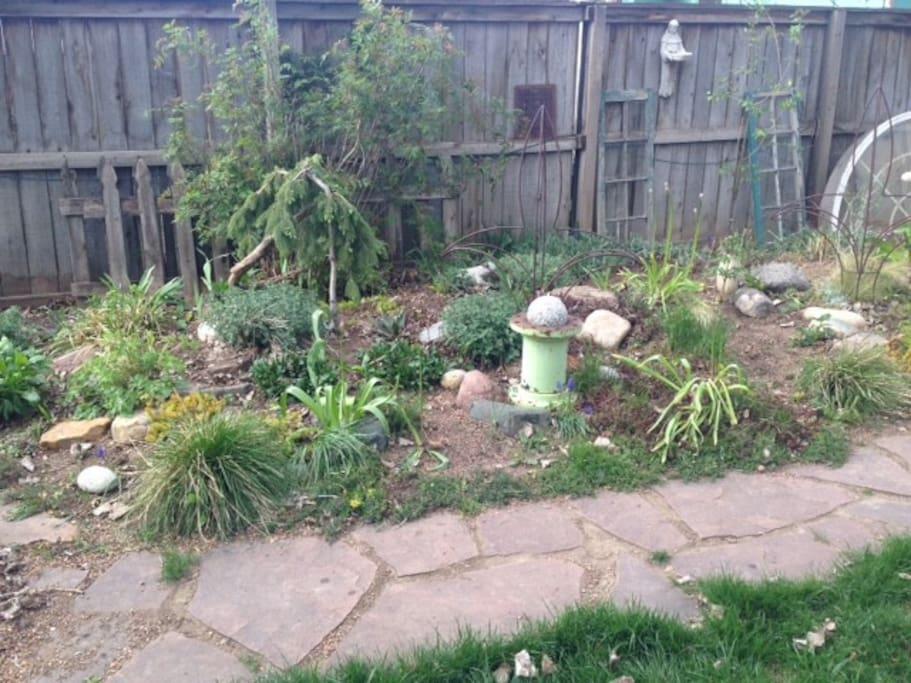 Xeriscaped landscape in backyard.