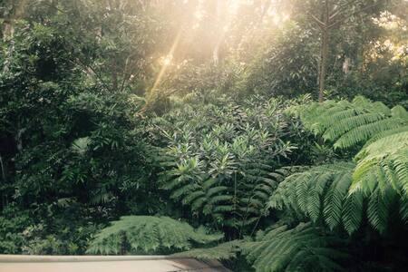 Akasha Freedom Sanctuary - Kuranda - Rumah Pohon