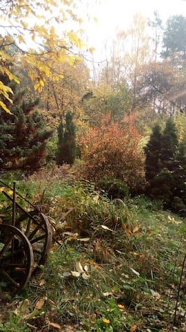 'Дом в лесу
