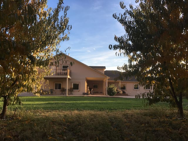 Solid Ground Orchard in Palisade, New Listing, MIL