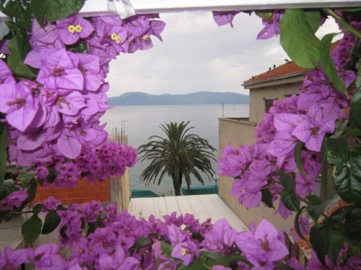 Apartment Graci - 20 m from pebble beach: A1(4+2) Gradac, Riviera Makarska