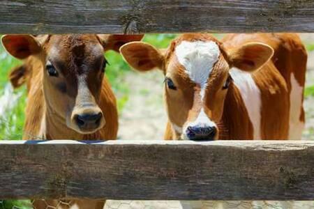 Good Karma Micro-Dairy - Farm /Breakfast included