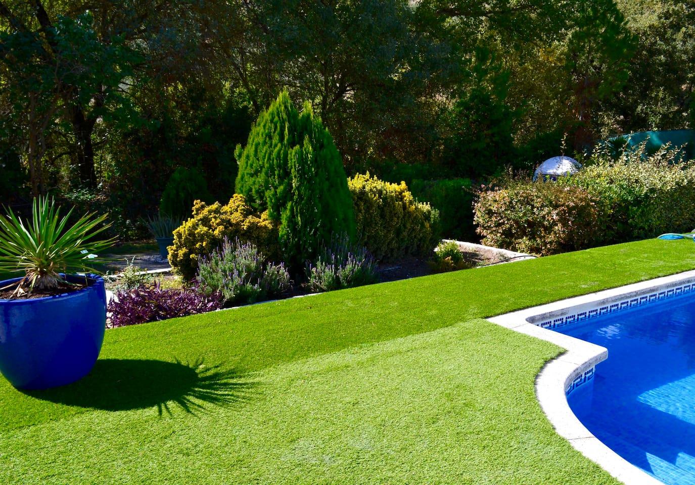 Garden with lovely mature shrubs