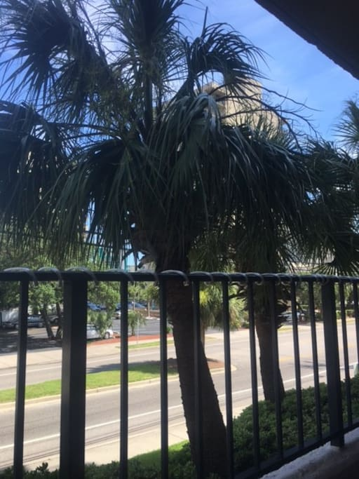 Great 1st Floor location without need for elevator.   Palm trees in front of the porch add tropical feel.
