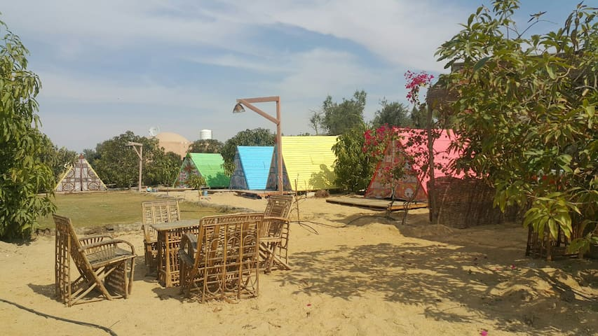 Cute Nubian  CAMP SITE